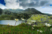 Alpine scenery with wild flowers and a glacier lake — 图库照片