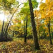 Autumn foliage in the forest, on a bright sunny day — Stock Photo #58852291