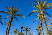 Palm trees against sky — Stock Photo
