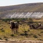 在一片绿色的草地上牛 — 图库照片 #69801423