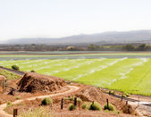Watering fertile calif farmland — Stock Photo