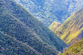 Jungle Covered Hills — Foto Stock