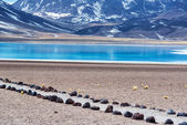 Lake Miscanti in Chile — Stock Photo