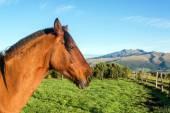 Häst huvudet närbild — Stockfoto