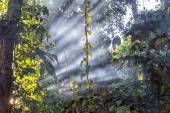 Jungle Light Beams — ストック写真
