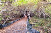 Forested Path — Stock Photo