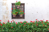 White Wall and Red Flowers — Stock Photo