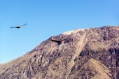 Colca Canyon and Condors — Stock Photo