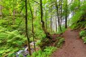 Columbia River Gorge Trail — Stock Photo