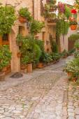 Flower street in Spello (Umbria, Italy) — Stock Photo
