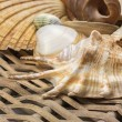 Closeup view of seashells in the used wicker basket. Vertically. — Stock Photo #72668501