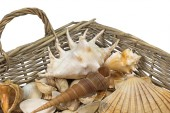 Seashells in a wicker baket isolated. Horizontally. — Stock Photo