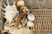 Seashells in the wicker baket — Stok fotoğraf