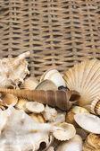 Seashells n the lower side of wicker baket. Vertically. — Stock Photo