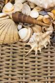 Seashells  in the upper side of old wicker baket. Vertically. — Stock Photo