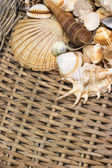 Aerial view of seashells in the old wicker basket. Vertically. — Stock Photo