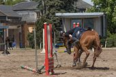 The horse refused to jump over an obstacle — Stock Photo