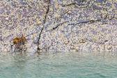 Waterline in an Scottish loch — Stock Photo