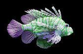 Pterois volitans, Lionfish - Isolated on black — Stock Photo