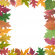 Collection of  autumn leaves  — Stock Photo #57215975