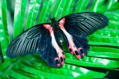 Butterfly on leaves — Stock Photo