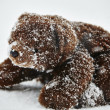 Stuffed animal toy teddy bear in winter snow — Stock Photo #62013329