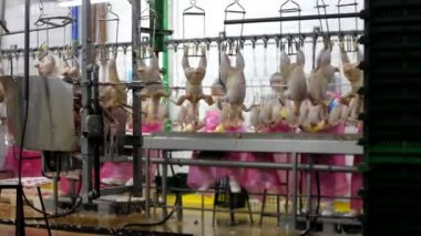 Food processing factory — Stock Video