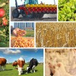 Agriculture - collage — Stock Photo #71038313