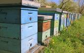 Beekeeping, bees and hives in the orchard — Stock Photo