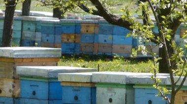 Beekeeping — Stock Video