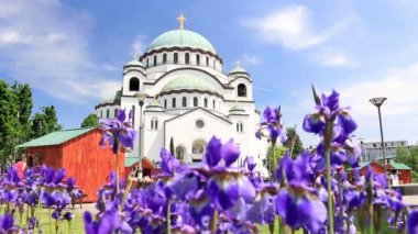 Beautiful Flowers and Temple of Saint Sava — Stock Video