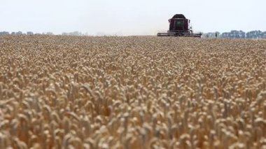 Wheat harvest, Combine in action — Wideo stockowe