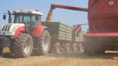 Wheat harvest, Combine in action — Stock Video