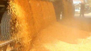 Loading Corn into the Silo — Stock Video