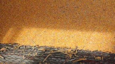 Inläsning av majs i silo — Stockvideo