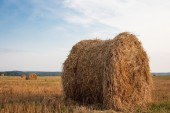 Agricultural field with hay rolls — Stock Photo