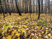 Forest in autumn colors — Stock Photo