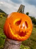 Jack-o-lantern kabak — Stok fotoğraf