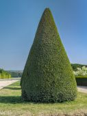 Green shrub — Stock Photo