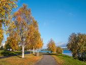 Autumn landscape with bridge — Stock Photo