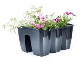 Flower box — Stock Photo