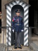 Guard of Honor — Stock Photo