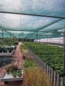 Gardening center — Stock Photo