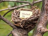 Bird's nest — Stock Photo