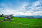 Rice fields, landscape terraced agriculture of Ban Pa Pong Pieng — Stock Photo