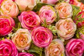 Pink color Roses  — Foto de Stock
