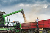 Harvesting of soybean — Stock Photo
