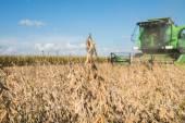 Harvesting soybean — Zdjęcie stockowe