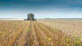 Harvesting soybean — Stock Photo