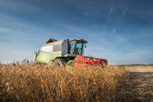 Harvesting of soy bean — Stock Photo
